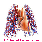 Heart and lobe of the lung, graphic